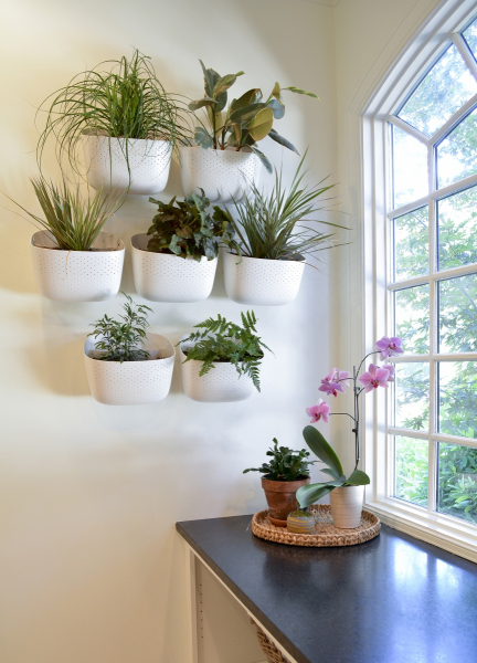 Planters-on-Wall